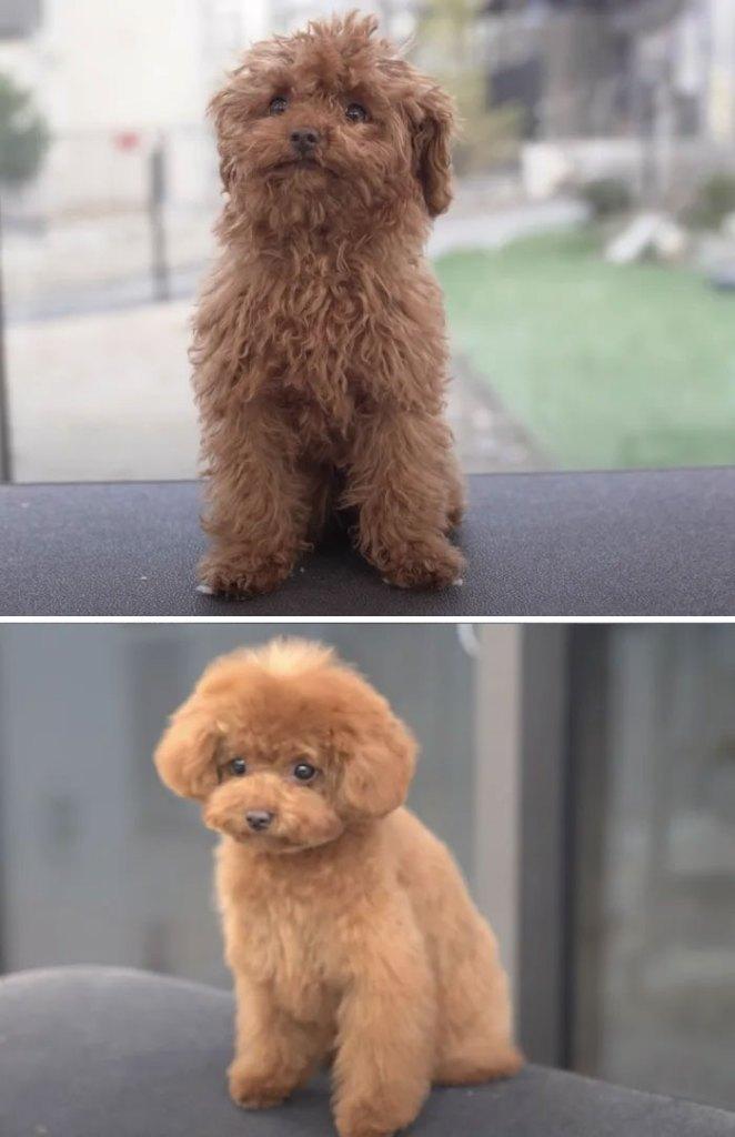 Amazing Dog groom transformations