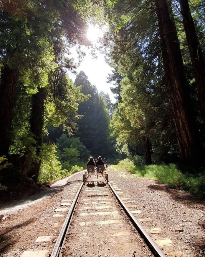 Pedal Through California's Redwood Forest On A Railbike