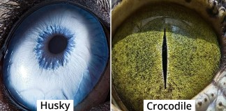 Armenian Photographer Captures Just How Unique Animal Eyes Are