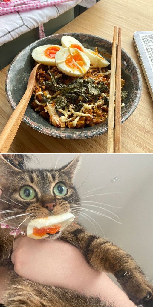 Cats Dogs Stealing Foods