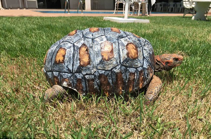 First 3D Shell for Injured Tortoise