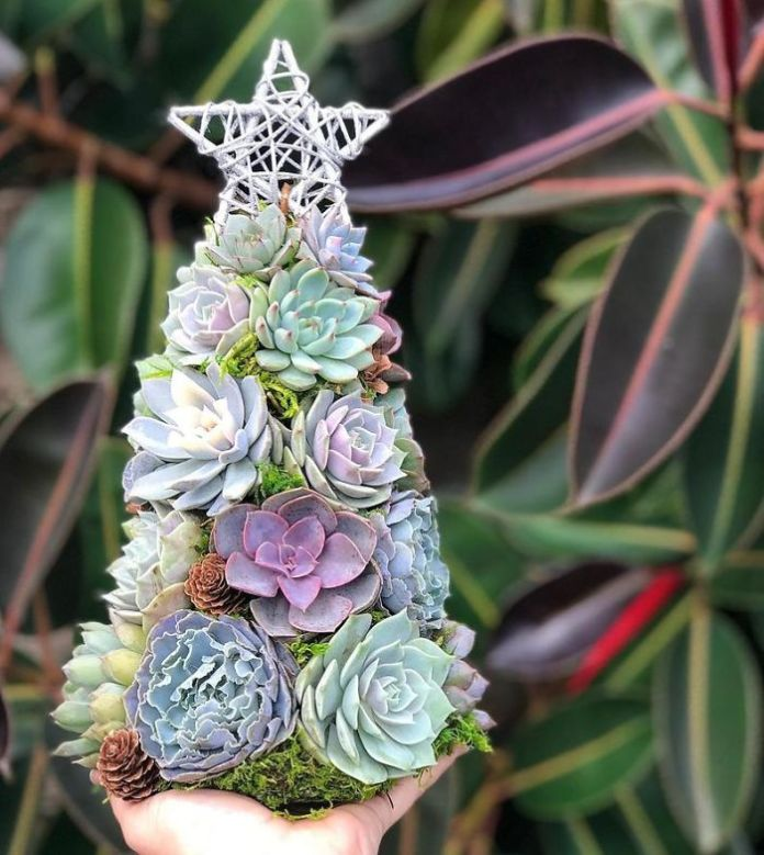 These 13-Inch Succulent Christmas Trees Are Ideal For Celebrating In A Small Space