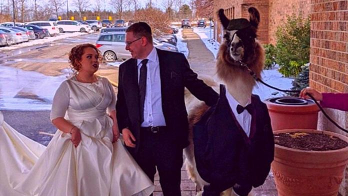 Guy Crashes His Sister's Wedding With A Llama Just As He Promised 5 Years Ago