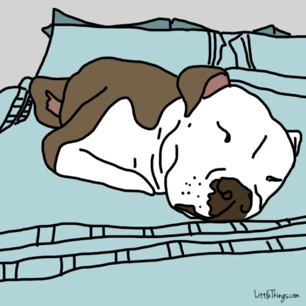 hondenbed hondenmand mand