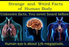 Weird Medical Facts About The Human Body