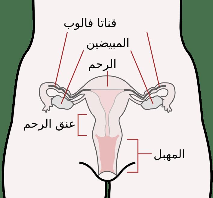 التهابات عنق الرحم - حديث الصباح