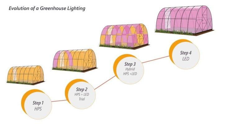 evolución natural de un invernadero con luz complementaria
