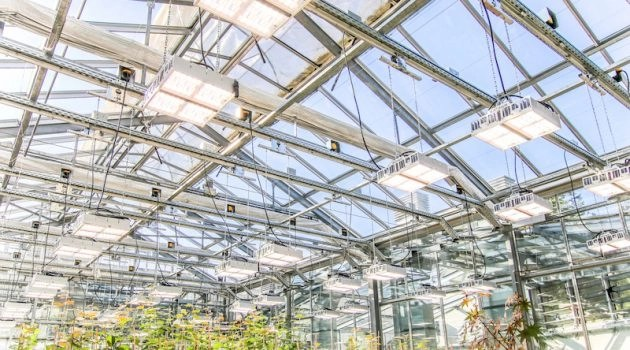 Valoya lights greenhouse - Virex