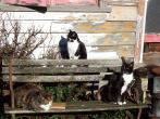 cat_kennel_010[1]