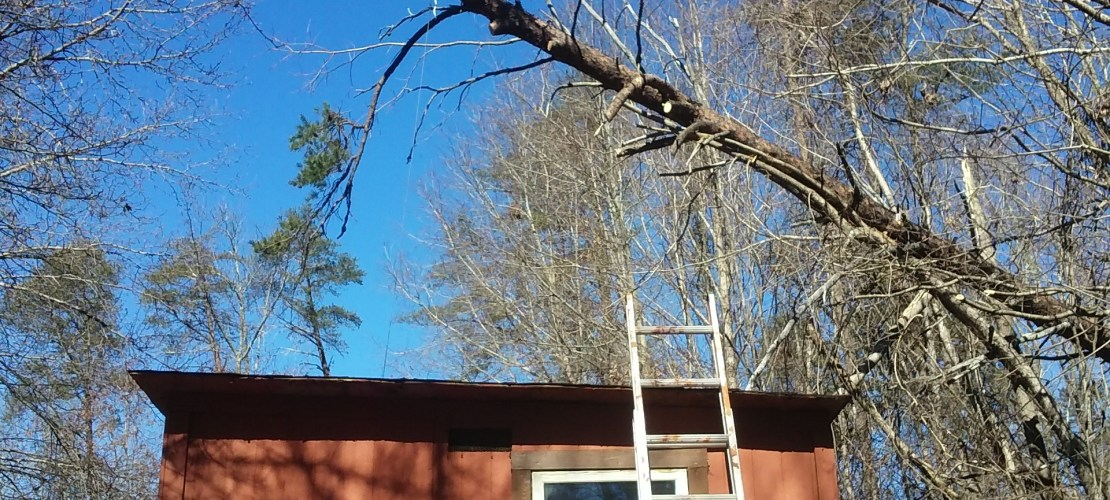 If you look at how far over the roof of the coop that tree is, you will realize that he had to place another ladder on the roof and get on top of that to get close enough to get the end of that rope around the tree.