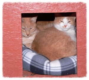 They like to go in their house on the deck in cold weather.