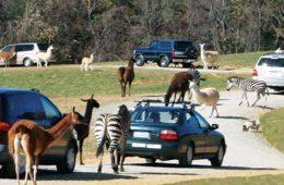 virginia safari park