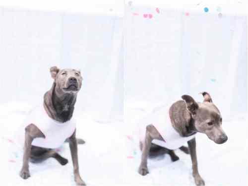 dog birthday cake smash photos