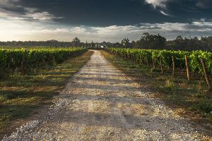 country-lane-428039_1280
