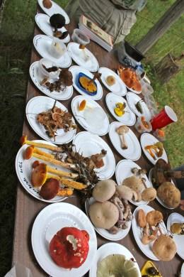 Mushroom Foray 2012