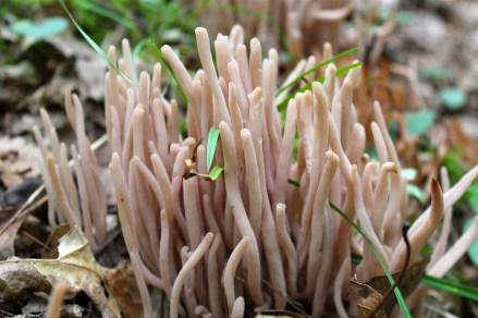 Smokey Worm Coral