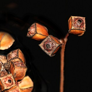 The boxes rattle when shaken; the seeds sprinkle out of the small hole at the top