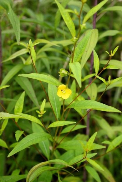Seedbox: leaves, stems, flowers
