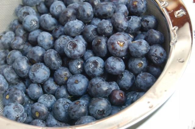 Blueberry Recipes on www.virginiawillis.com
