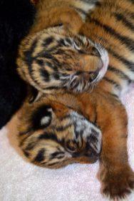 cubs 6 008