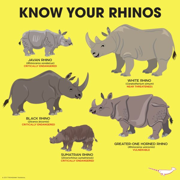 Image result for already extinct rhinoceros