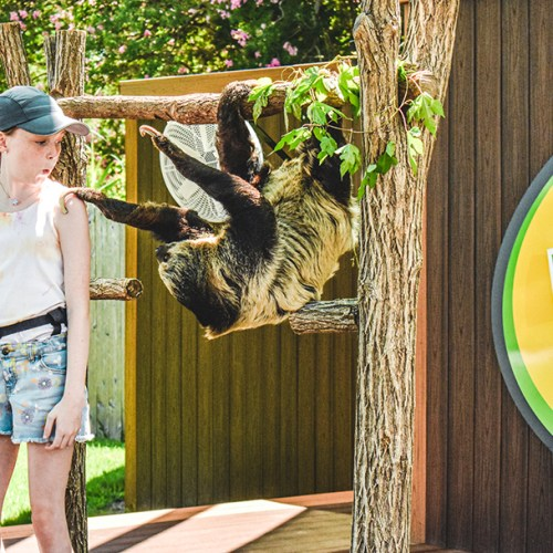 girl looking at sloth hanging next to her on tree