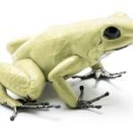 Mint Dart Frog