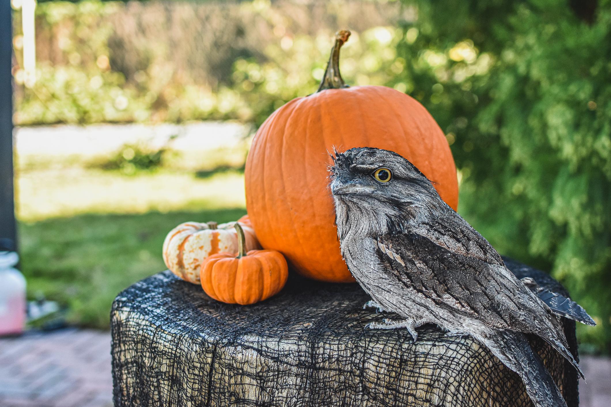 bird sitting next to pumpkins