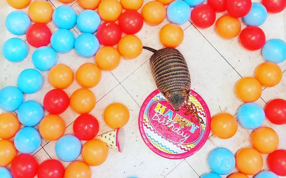 armadillo on a paper plate with balloons around it
