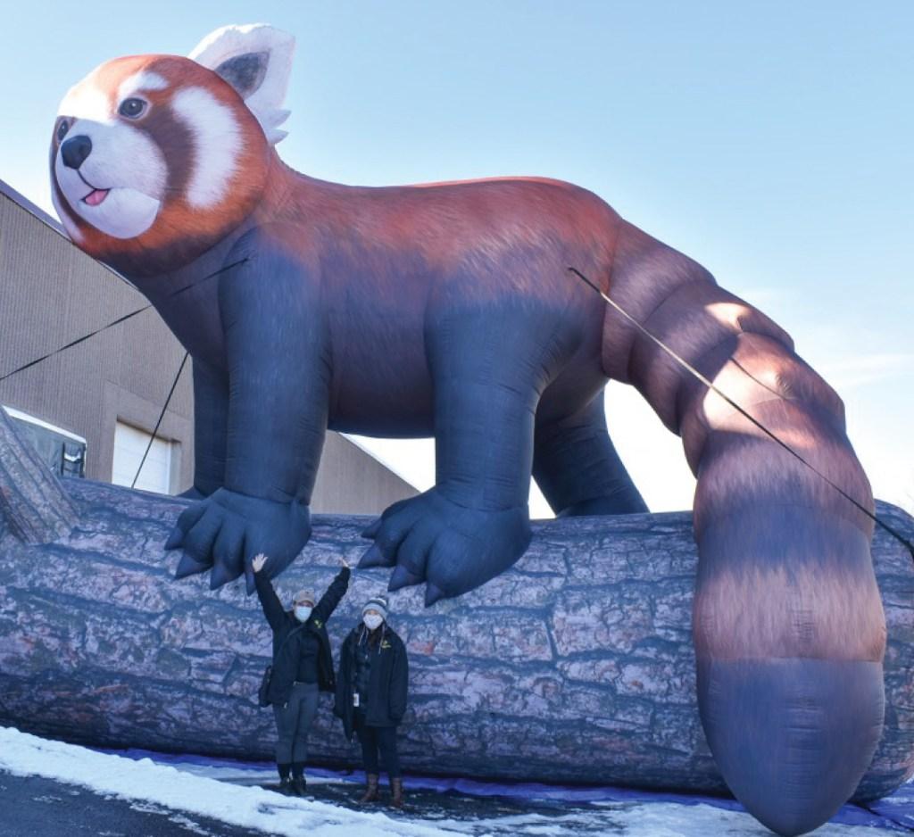 Red panda inflatable animal sculpture