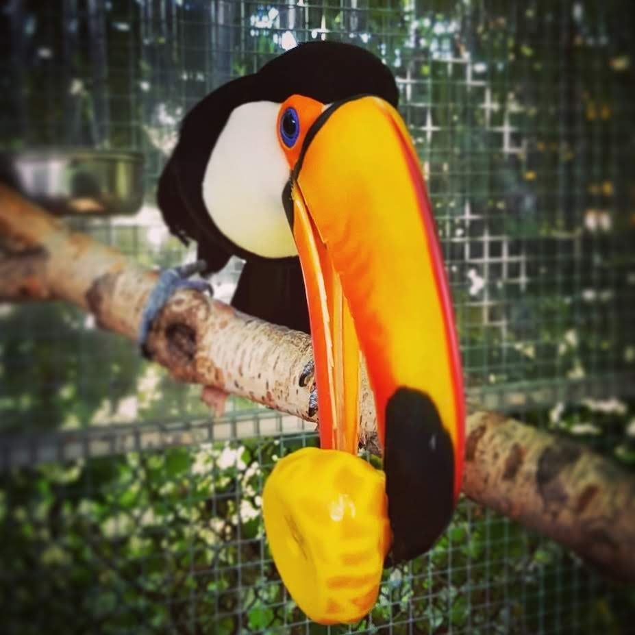 toucan holding rubber ducky