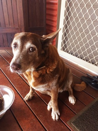 Tango - our snake dog
