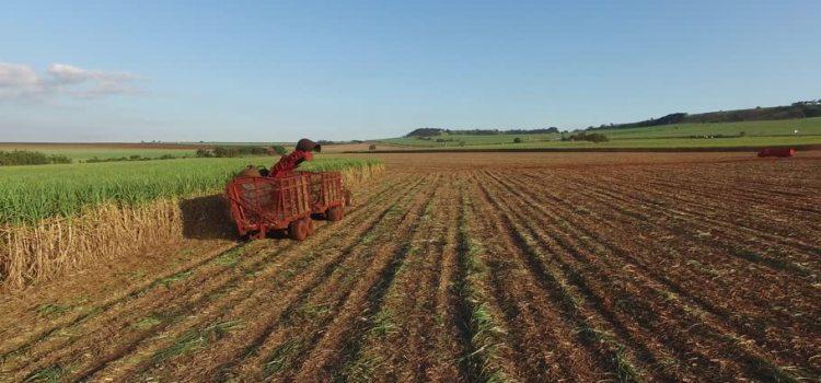 automated sugarcane harvesting