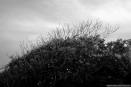 no-tree
