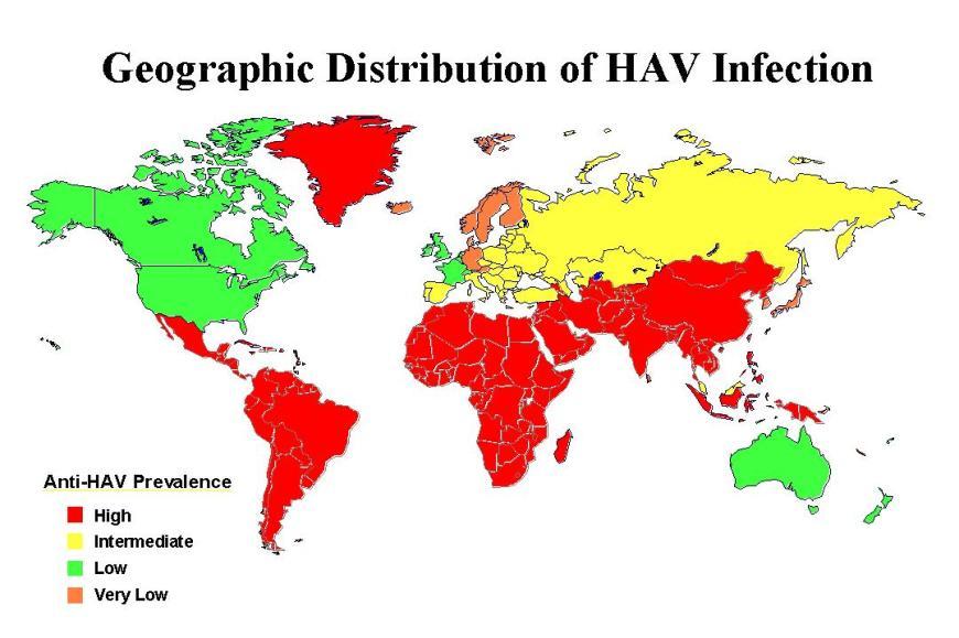 Hepatitis B Symptoms And Contagious