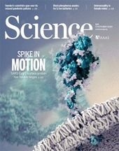 Contextualizing bats as viral reservoirs | Science