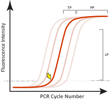 Real-time PCR curve