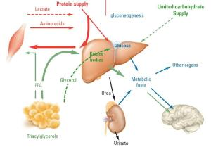 How Ketosis Works On Your Body?