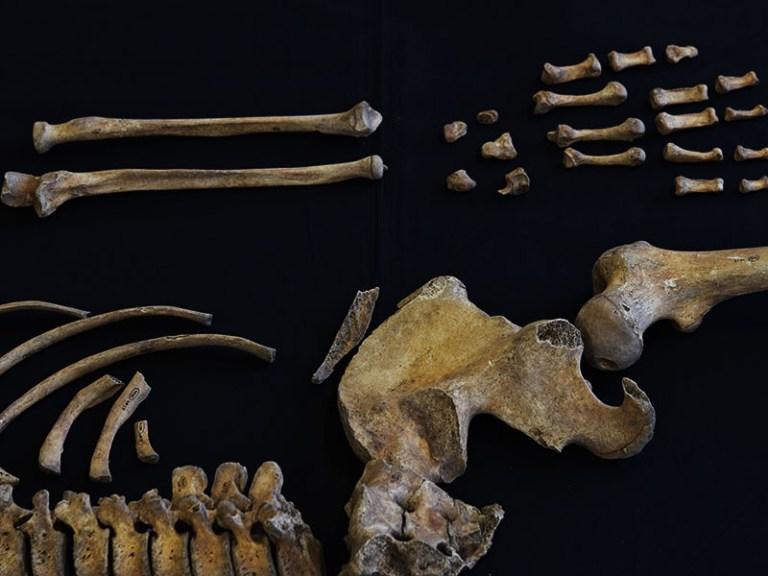 forensic_skeleton_hip