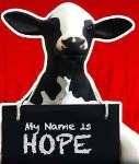 nccaa-holy-cow-hope