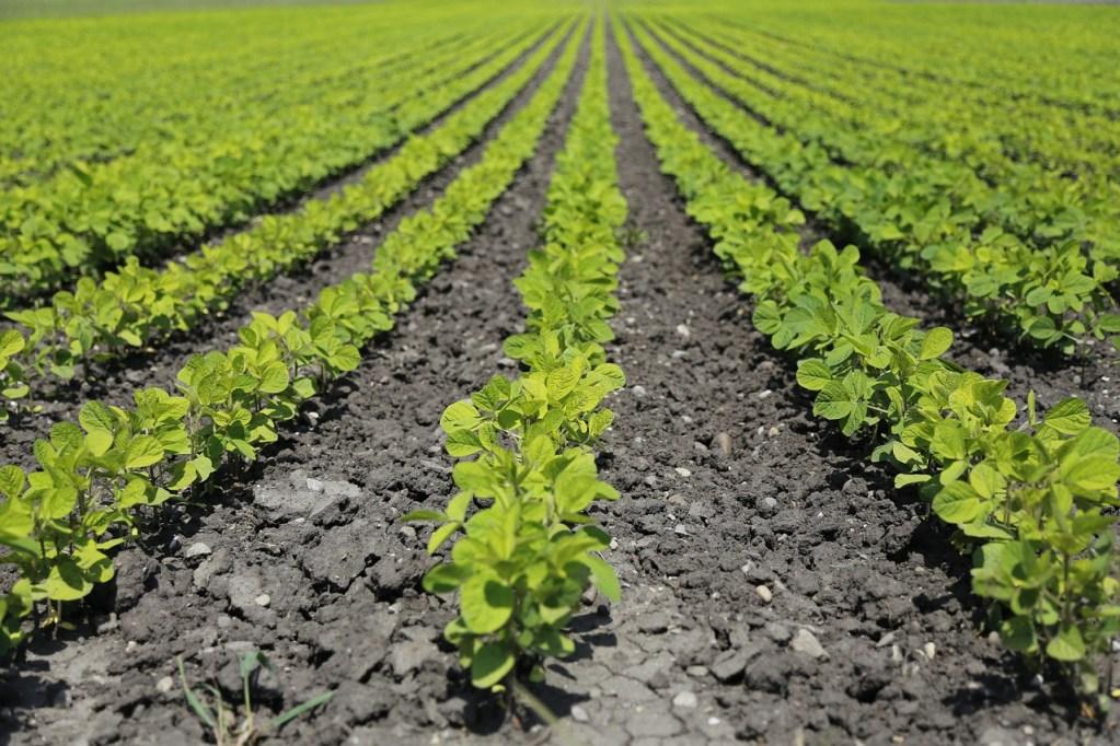 digital sharecropping
