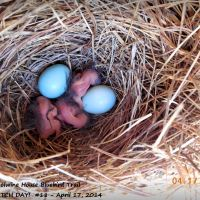 FIRST HATCHING ON THE TRAIL - APRIL 17, 2014