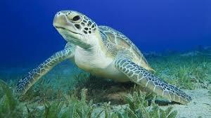 sea turtle 360