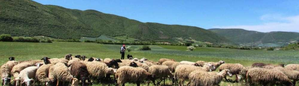 Pascoli Azienda Agricola Salvatori Celestino