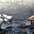 Simpatía por el Débil: las 10 muertes en pantalla que más lamento