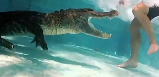 Caught-On-Alligator-in-pool-attacks-swimmer-Blogertize