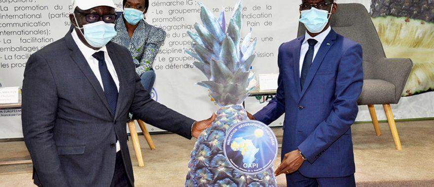 Promotion de l'ananas « Pain de sucre » du plateau d'Allada: Le Bénin reçoit son premier certificat d'enregistrement de l'Igp