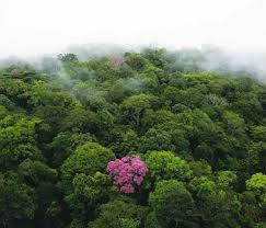 ONU defende educação sobre florestas para preservar recursos naturais