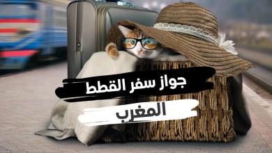 جواز سفر القطط المغرب طرق واسعار ووتائق الجواز