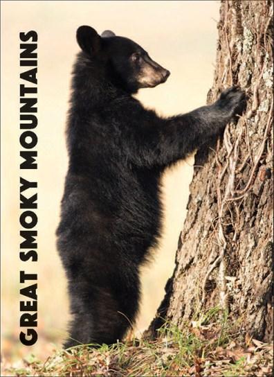 A Bear at Great Smoky Mountains